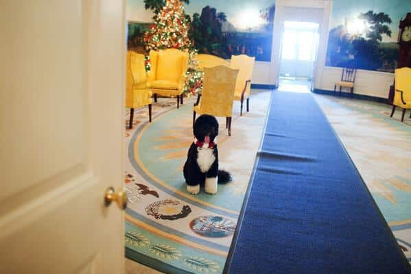 Obama's Dog Wishes