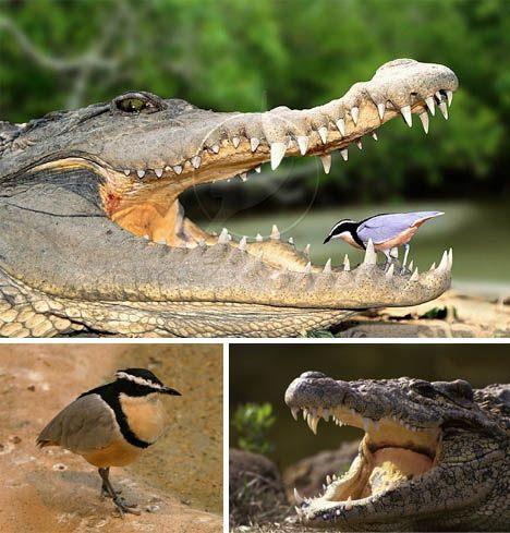 Animal Minds, As NATURE IS NURTURE