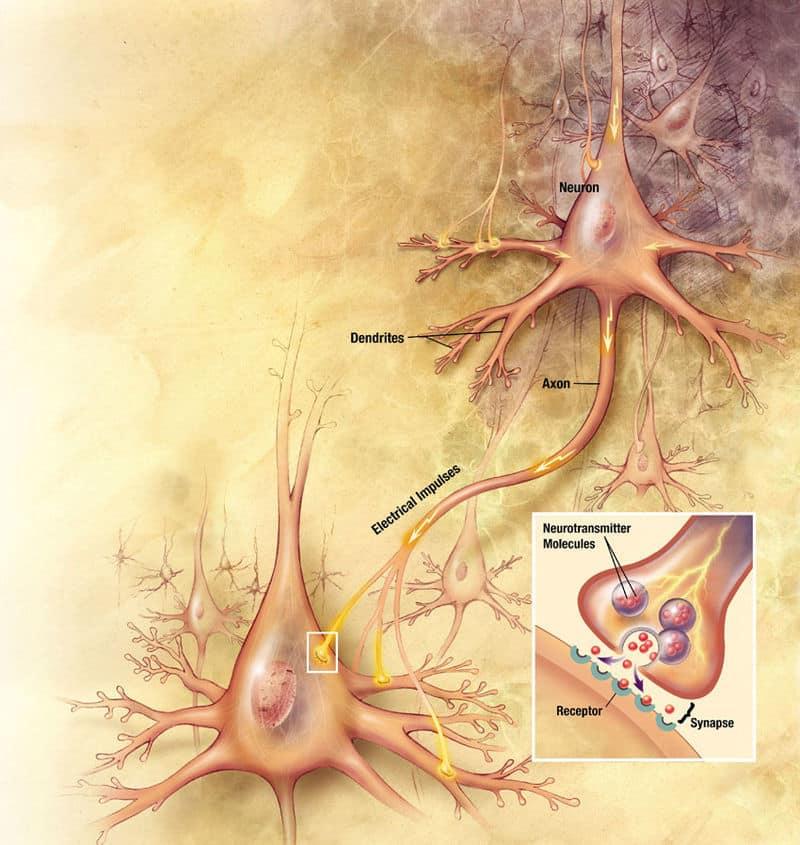 LOGOS: Brain Elements