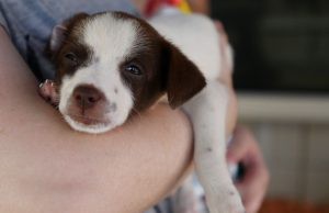 N.J. animal shelter temporarily closes due to dog flu