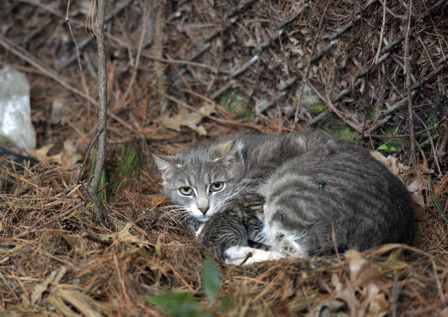 Rabid cat captured in Wilkes-Barre's North End; advisory issued by Health Dept. -Leader