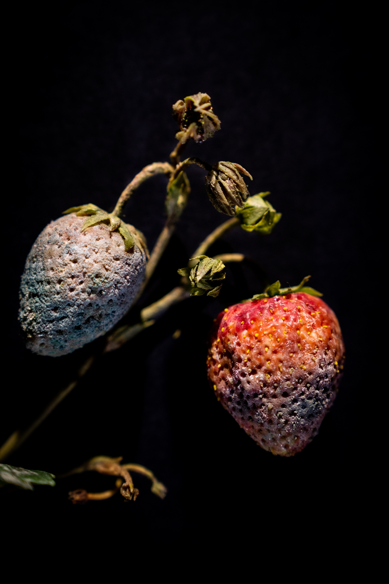 Rotting-fruit art points up plants in peril