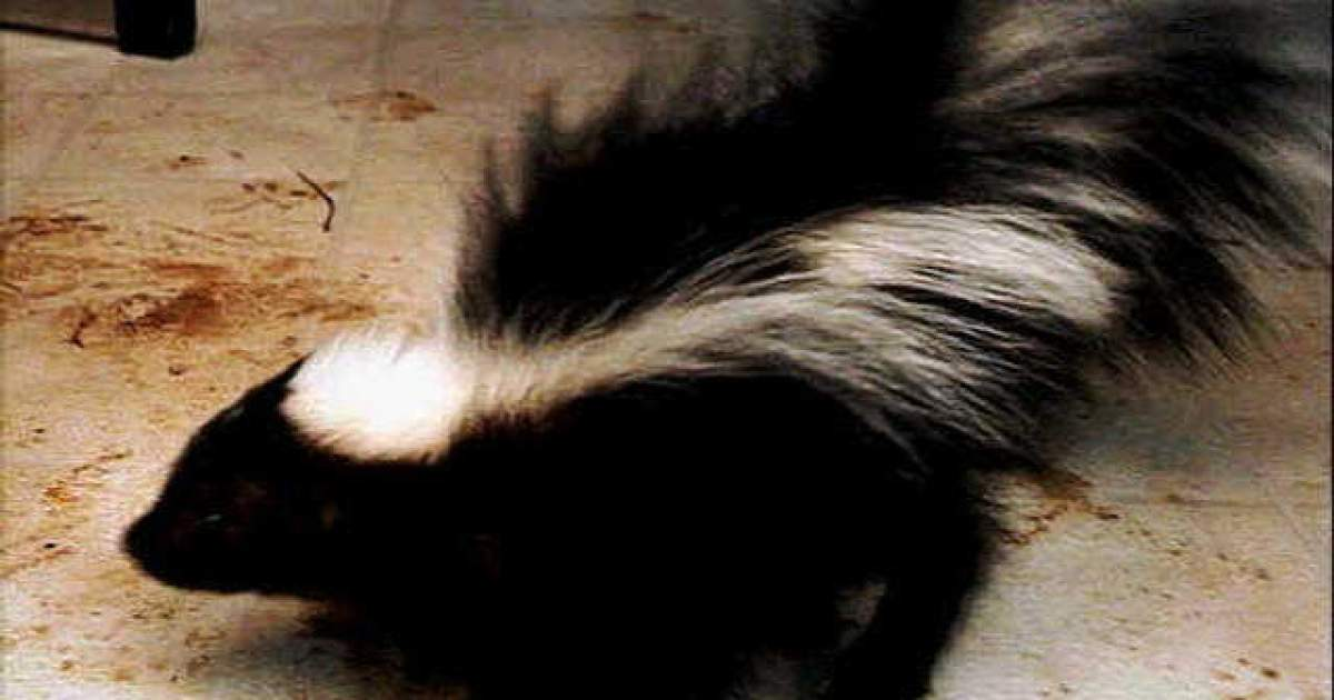 Oakland County confirms case of rabies in skunk found in West Bloomfield