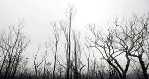 2 more missing in Australian wildfires as rain brings relief