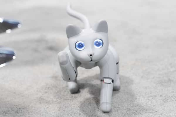 Meet MarsCat, a robot cat with lots of love to give and room to grow