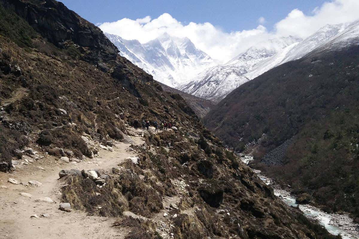 Plants are growing higher up Mount Everest as the climate warms