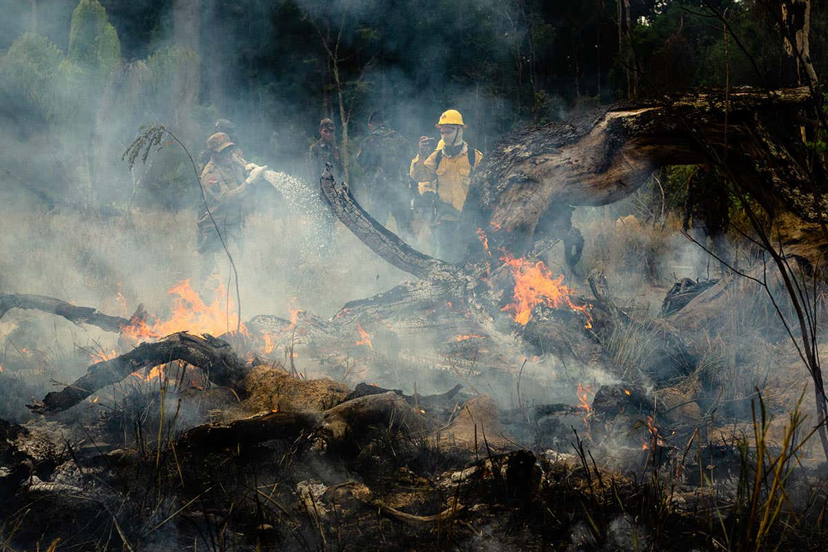 Area of Amazon affected by wildfires predicted to grow by 2050