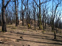 Fires set stage for irreversible forest losses in Australia