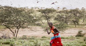 AP Explains: How climate change feeds Africa locust invasion