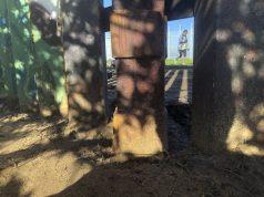 Border Patrol allows replanting after bulldozing garden