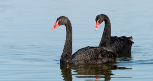Two 'black swans' could help Trump deliver historic foreign policy wins