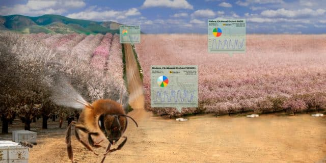 BeeHero smartens up hives to present 'pollination as a service' with $4M seed spherical